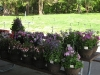 2010 Plant Sale - Purple Profusion